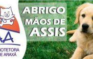 CANIL MUNICIPAL: VEREADORA FERNANDA CASTELHA PEDE APOIO PARA ONG MÃOS DE ASSIS